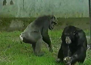 Porn monkey animal .:: Zoo